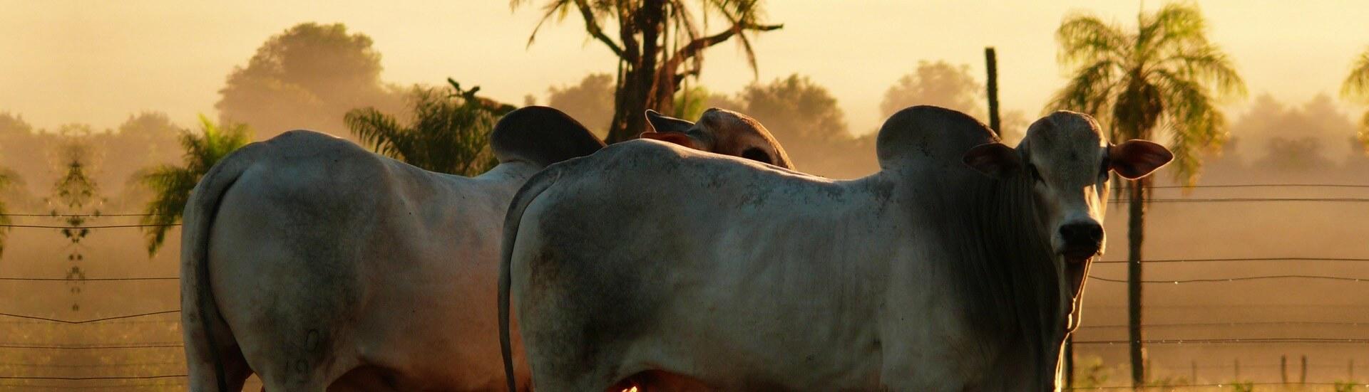 Banner touros por do sol