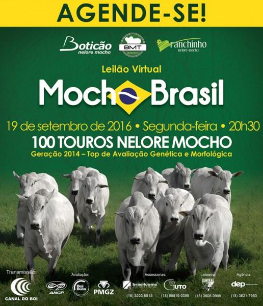 Leilão virtual Mocho Brasil